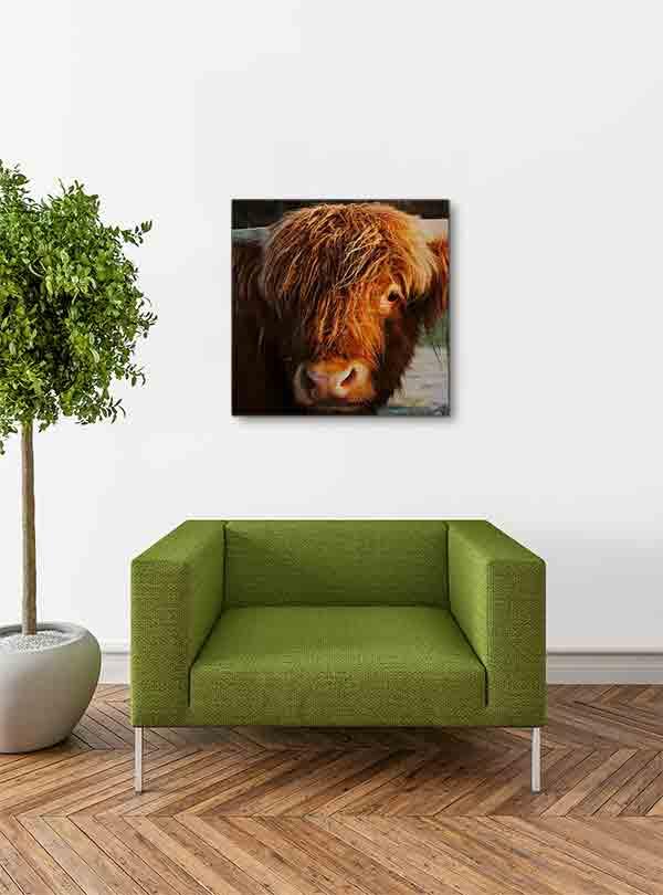 Schottland Highland Rind. Es zeigt das Bild eines jungen schottischen Highland Rindes, welches frontal in die Kamera schaut. Von dem Rind ist hauptsächlich nur der Kopf und die Hörner zu sehen. Die Farbe des Fells ist hellbraun. Das Bild ist im Querformat und in Farbe. Das Alu Dibond Bild hängt an einer stylische eingerichteten Wohnzimmerwand.